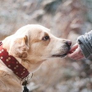 Passeggiate con il cane per i pazienti con tumore al polmone