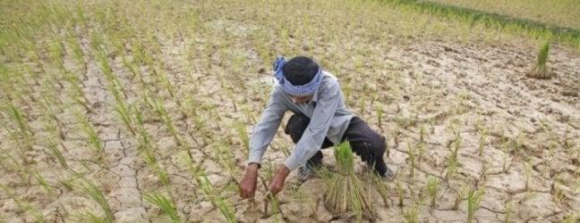 Cambogia, un popolo abituato alle inondazioni fa i conti con una drammatica siccità e con la raccomandazione di non coltivare riso