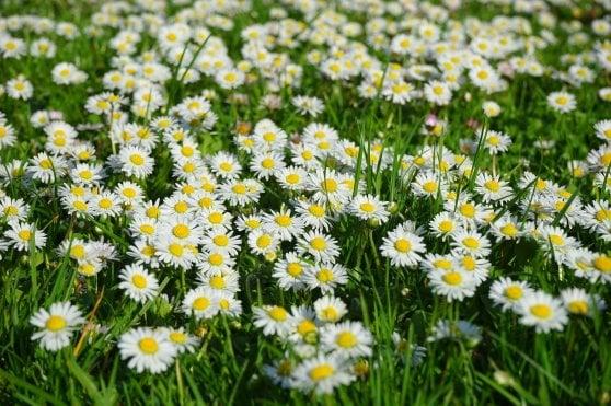 Equinozio di primavera è oggi 20 marzo (e non domani): alle 22.58 finisce l'inverno