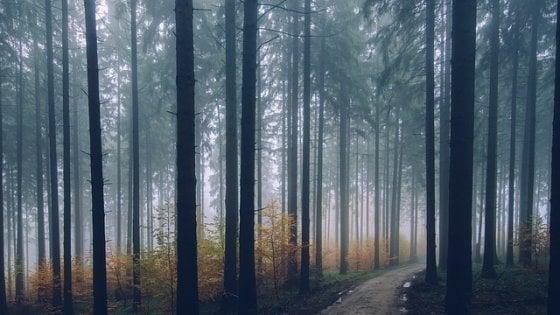Italia, la rivincita delle foreste: si moltiplicano nelle terre abbandonate