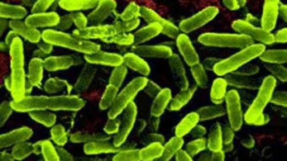 Tumore allo stomaco, 8mila euro l'anno a carico dei pazienti per probiotici e fermenti