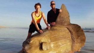 Il Big fish esiste davvero:  trovato un pesce luna spiaggiato