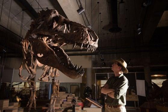 Scotty, un T.rex da record: è il più grande mai scoperto