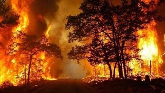 Un incendio al giorno nel 2019. Tutta colpa del caldo e della siccità