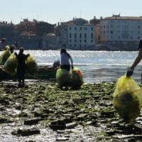 Un calcio alla plastica in laguna. Così volontari e calciatori ripuliscono Venezia