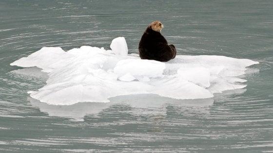 Caldo record in Alaska, temperature più alte di venti gradi