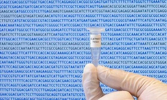 Un nuovo batterio esiste in natura. Il suo Dna creato dal computer