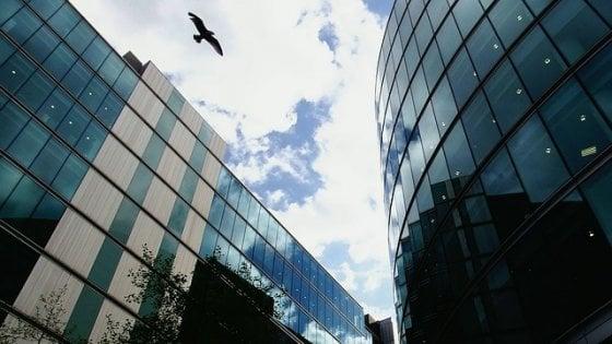 I grattacieli uccidono un miliardo di uccelli l'anno