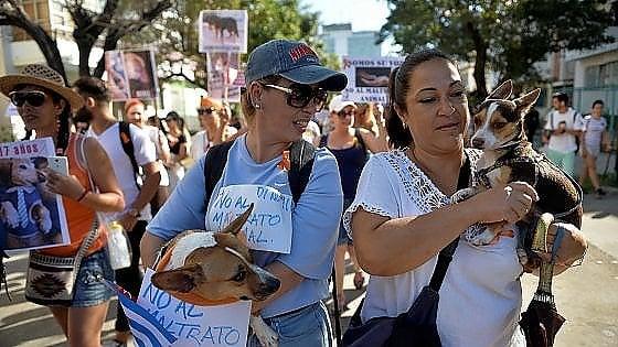 Giorno storico a Cuba, il governo approva una marcia di animalisti