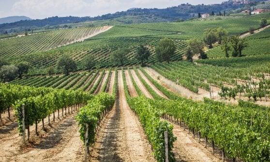 Il Nobile di Montepulciano e il suo territorio, tra buon cibo e grandi bottiglie