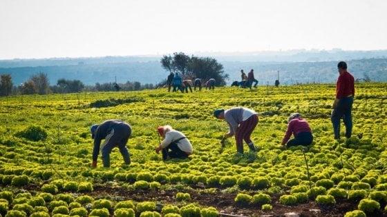 """Agricoltura, allarme per la stagione estiva: Manca manodopera straniera"""""""