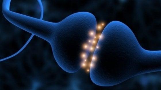 Individuati i neuroni specchio delle emozioni