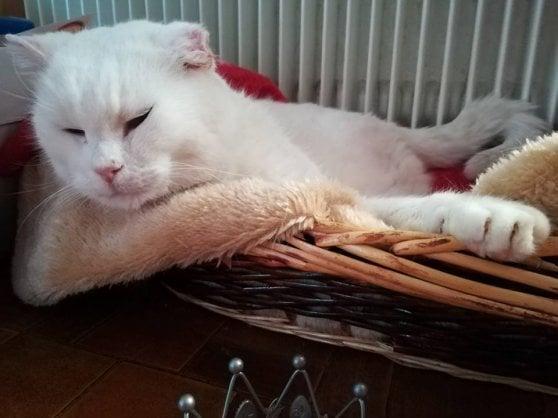 Picci, la star del web che aiuta i colleghi gatti con la vendita dei suoi gadget. E a tempo perso dà lezioni di astrofisica