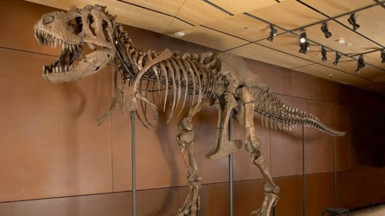 Baby T-rex in vendita su Ebay per quasi 3 milioni di dollari