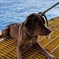 Boonrod, il cane salvato in mezzo al mare