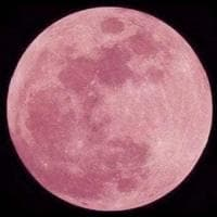 Oggi tutti col naso all'insù per vedere la Luna rosa