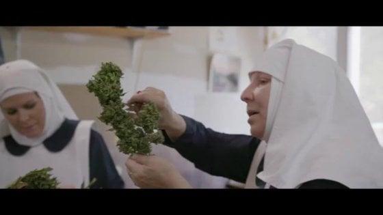 """Tra scienza, biodinamica e new age: la storia delle """"sorelle della cannabis"""" diventa un documentario"""