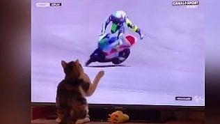 Il gatto e la MotoGP: ecco cosa accade quando tocca lo schermo