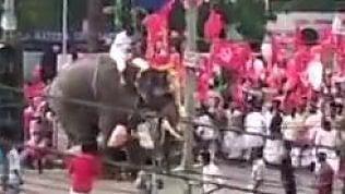 Al corteo sfila un elefante, ma non tutto va come dovrebbe