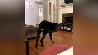 """""""Ecco cosa succede quando il cane riesce a mordersi la coda"""""""