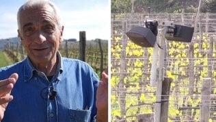 Il Brunello ascolta Mozart: musica tra le vigne in Val d'Orcia