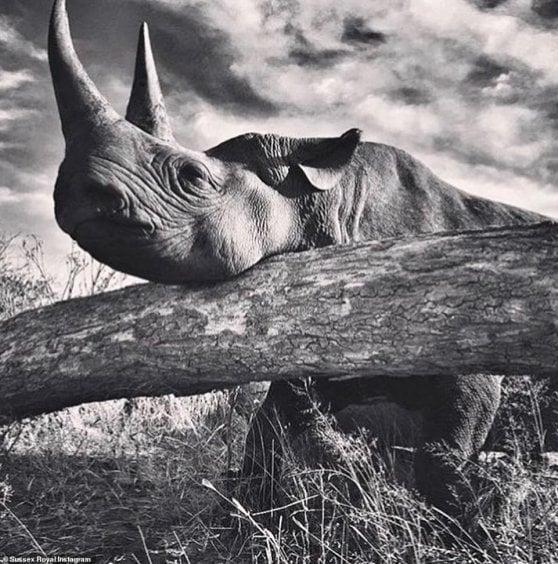 Harry, l'Africa e quella foto falsa dell'elefante. La brutta figura del principe