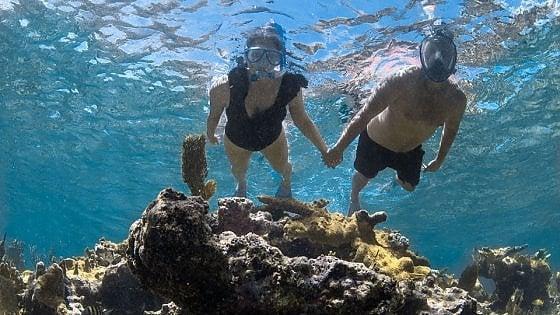 Mare, natura e reef: scoprire Grand Bahama, eden formato mare