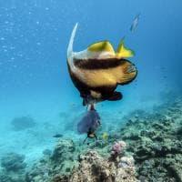 Hurghada, il ritorno del turismo nel Mar Rosso egiziano