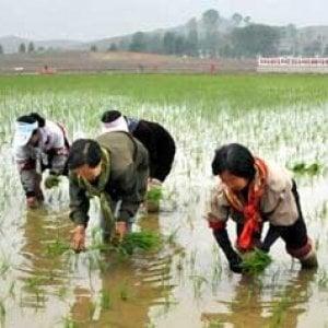 Corea del Nord, 10 milioni di persone minacciate dalla scarsità di cibo, dopo il peggior raccolto degli ultimi dieci anni