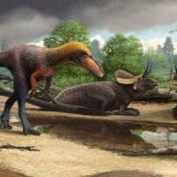 Ecco il più piccolo dinosauro mai conosciuto, il 'cugino' del T.Rex
