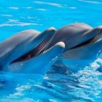 Vietato nuotare con i delfini. Il Tar: fa male alla loro salute