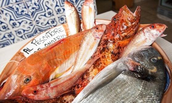 Al Pescatore, la super trattoria di Bari che porta il mare a tavola