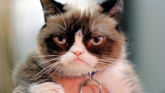 E' morta Grumpy, la gatta star del web