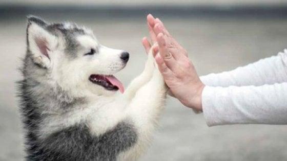 """""""Perché amiamo i cani? Semplice: è tutta una questione di geni"""""""