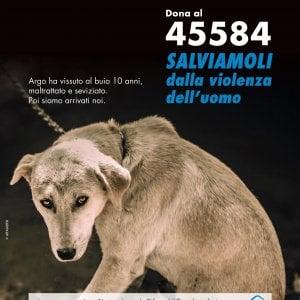 """Una casa per i cani bisognosi, al via la campagna di donazioni """"Mi affido a te"""""""