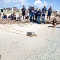 """Favignana, il riscatto della tonnara: """"Qui curiamo le tartarughe ferite"""""""