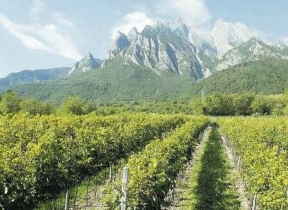 Tra le vigne eroiche (e artigiane) della Val Camonica