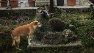 E' morta Nicoletta, cagnolina super fedele: ha vegliato per dieci anni sulla tomba del padrone