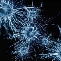 L'attività fisica migliora l'olfatto: lo studio sui neuroni