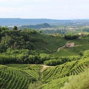 """Prosecco, ecco la ricerca che piace agli inglesi: """"Record di erosione nelle aree dove si produce il vino"""""""