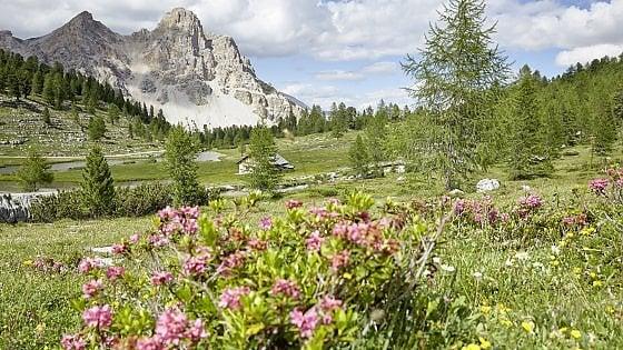 Un bagno di benessere... nella foresta. Tra Lombardia e Dolomiti, fenomeno forest bathing