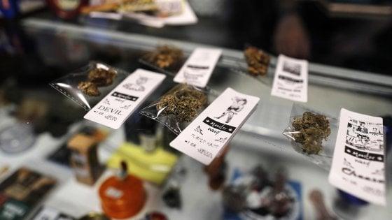 Cannabis light, procura Cassazione chiede di trasmettere gli atti alla Consulta