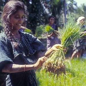 Agricoltura familiare e il suo ruolo chiave nello sviluppo sostenibile
