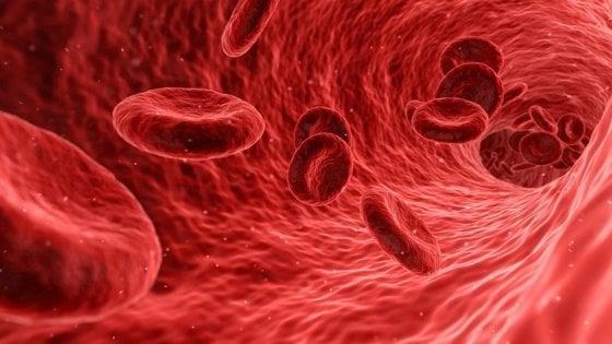 Prodotte le cellule staminali del sangue in grandi quantità