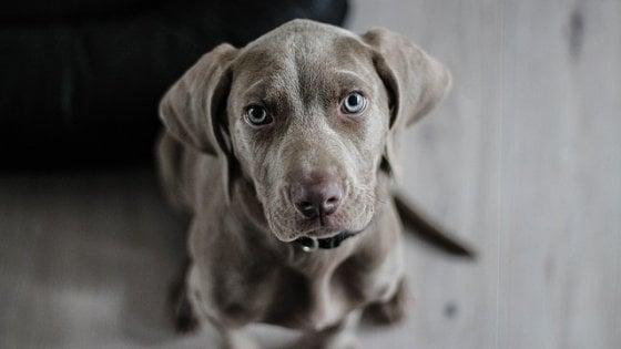 Cani e padroni sincronizzati: così trasmettiamo lo stress a Fido