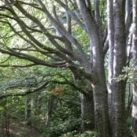 Allarme Greenpeace: l'agricoltura 'industriale' sta mangiando le foreste del mondo