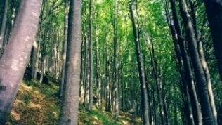 """""""L'agricoltura 'industriale' sta mangiando le foreste mondiali"""""""