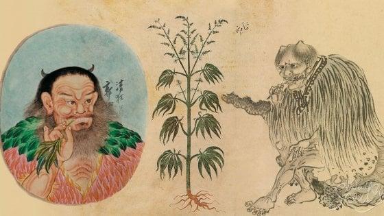 Cannabis, svelato il mistero: i primi a fumarla 2.500 anni fa furono i cinesi