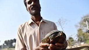 Il rifugio delle tartarughe -   ft