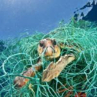 """""""Con queste reti salveremo migliaia di tartarughe in Italia"""""""